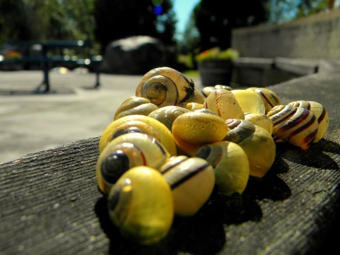 Light through the snail shells