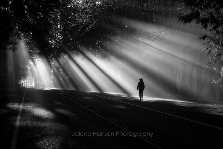 Canopy of Light