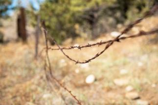Buena Visita_barbed wire