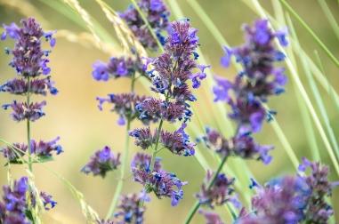 Methow Valley Flowers