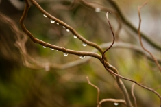 Raindrops in Winter