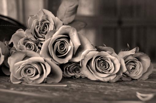 RosesinSepia