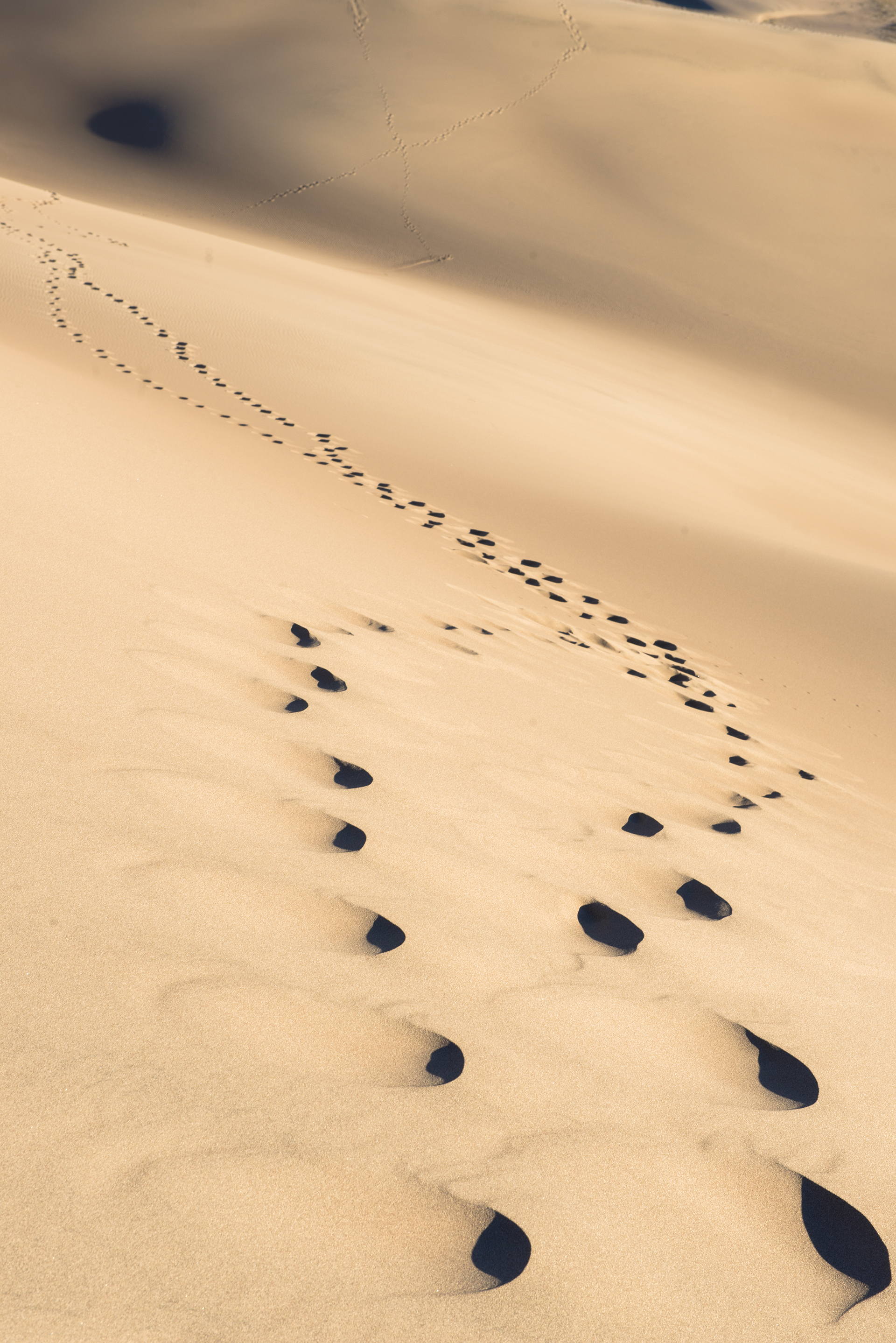 Magnificent Footprints In The Sand Wall Art Photos - The Wall Art ...