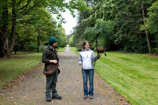 School of Falconry Hawk Walk