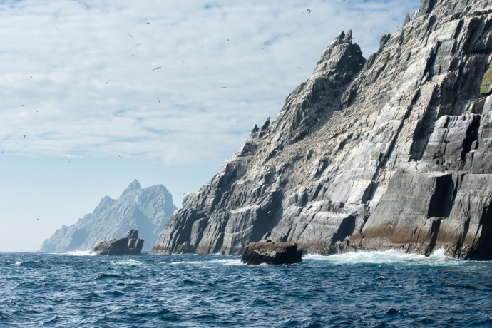 Little Skellig Birds