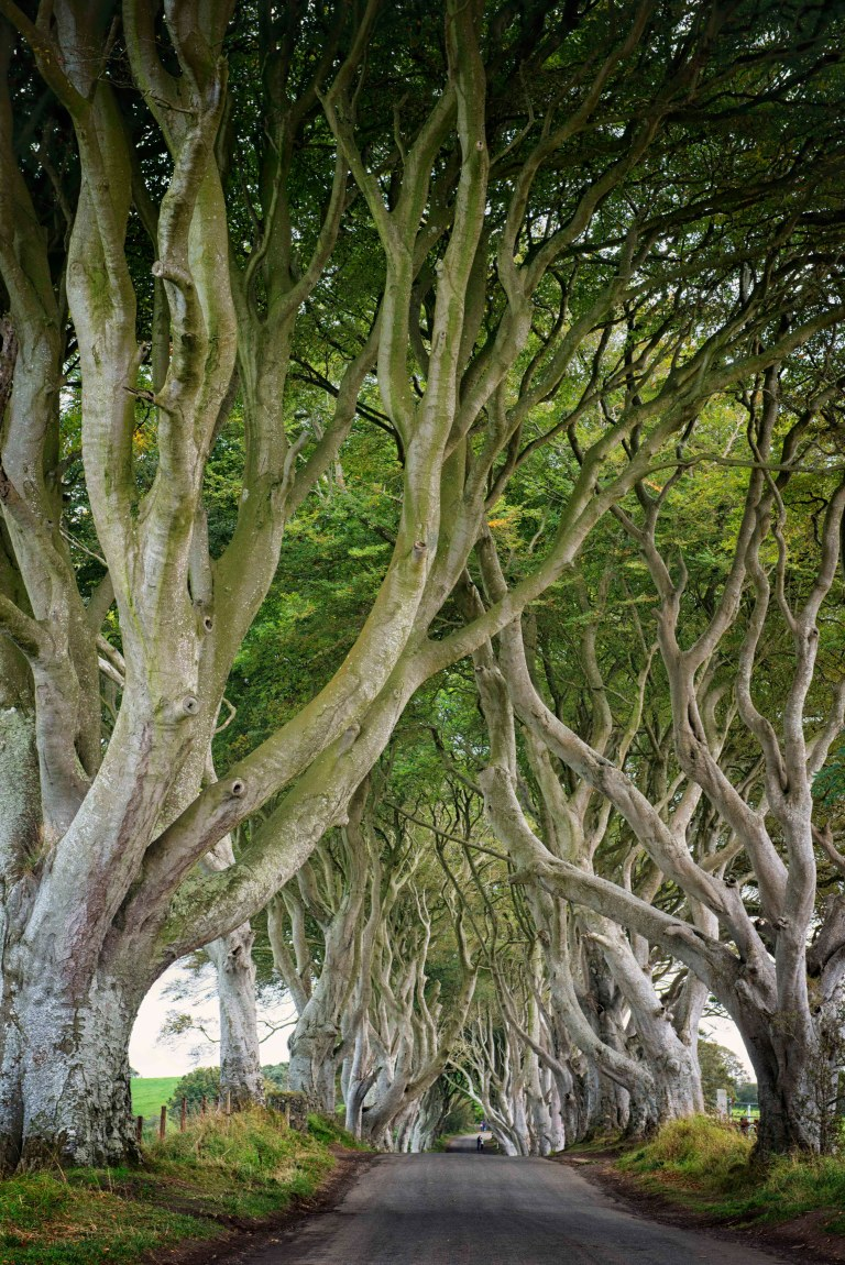 The Dark Hedges Portrait
